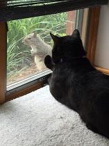 DARth Vader & Squirrel